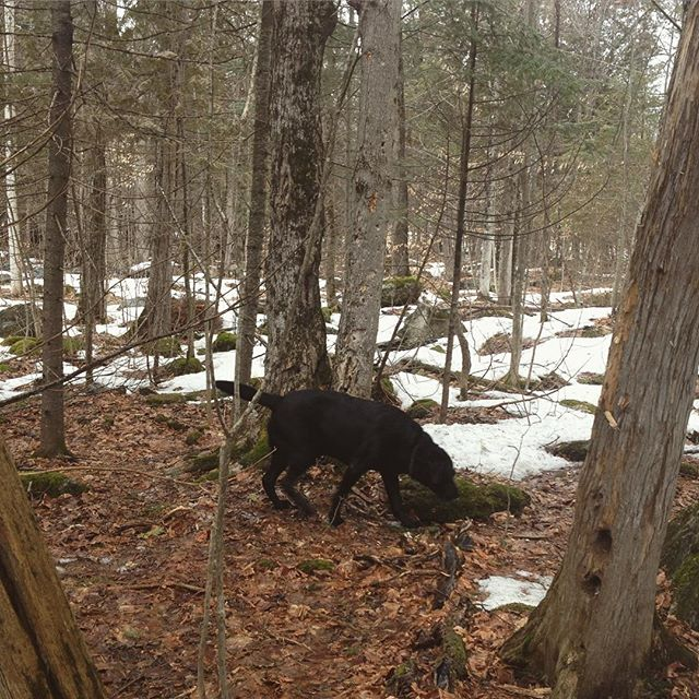 Dog friend / forest walks #nature #peaceful #ontario #staywild #adventure #friends