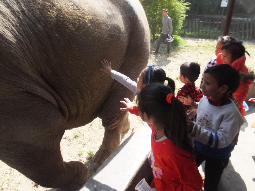 Elephant and kids.JPG