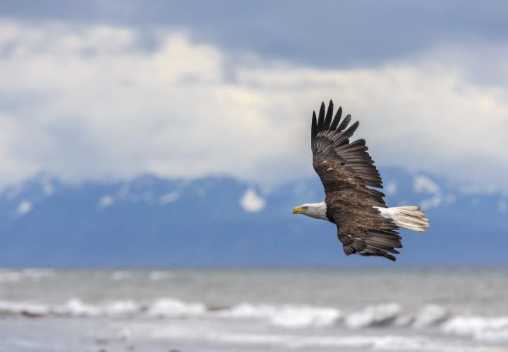 62013-how-to-soar-like-an-eagle-with-god-720x498.jpg