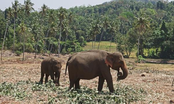 elephants-1043035_1920.jpg