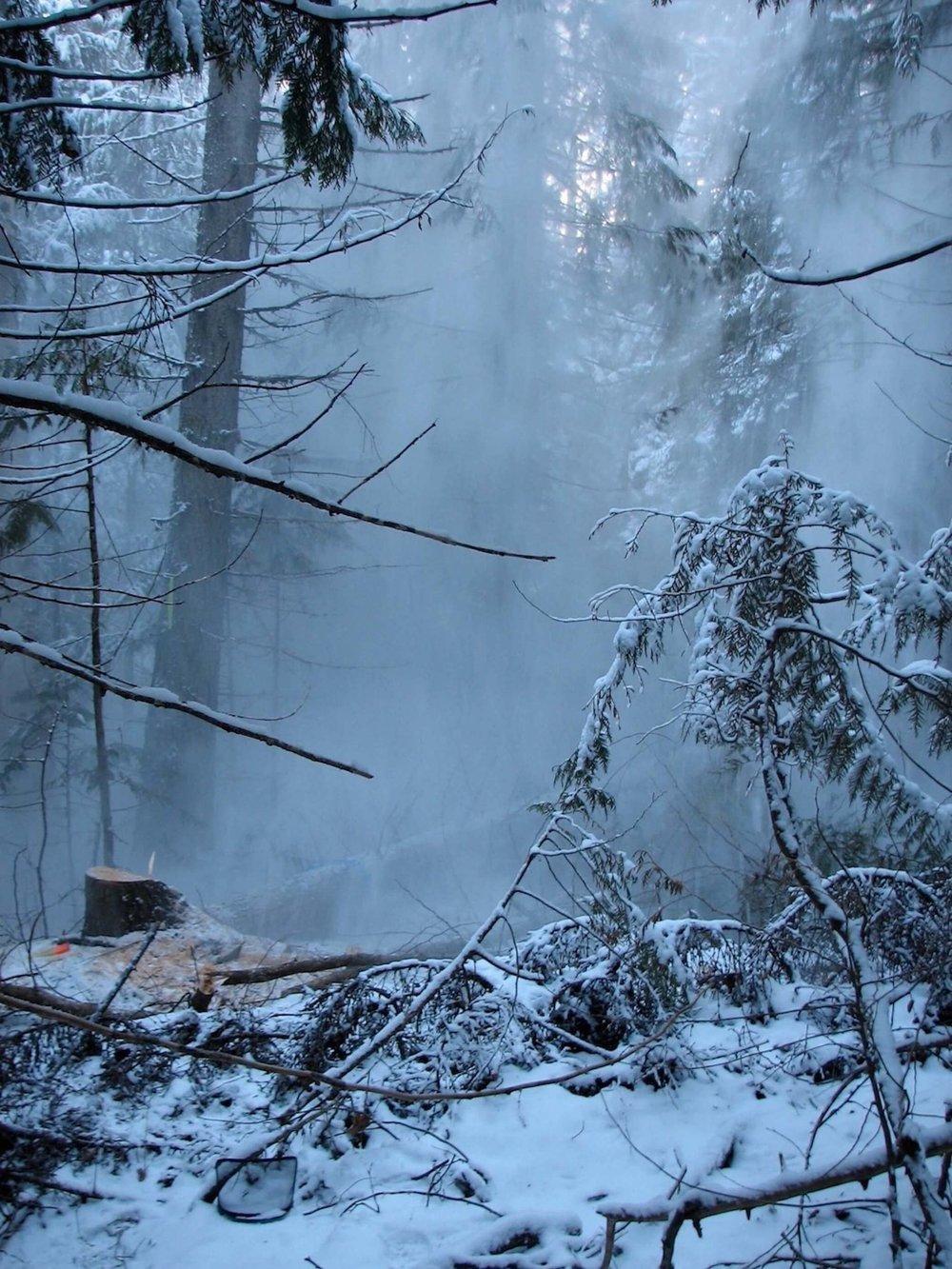 Logging at Robson.jpg