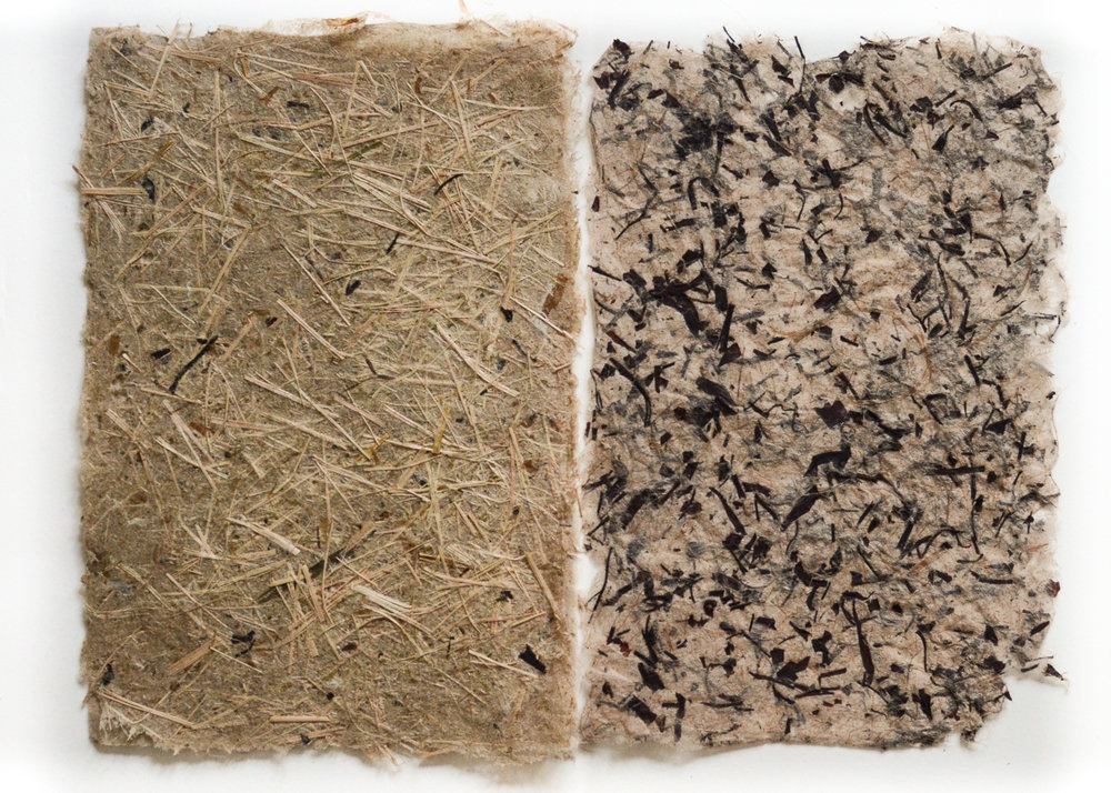 Leafy Spurge and Willow Bast from the Absaroka-Beartooth Wilderness 3, 12 in. x 9 in., abaca, leafy spurge, willow bast handmade paper, 2017