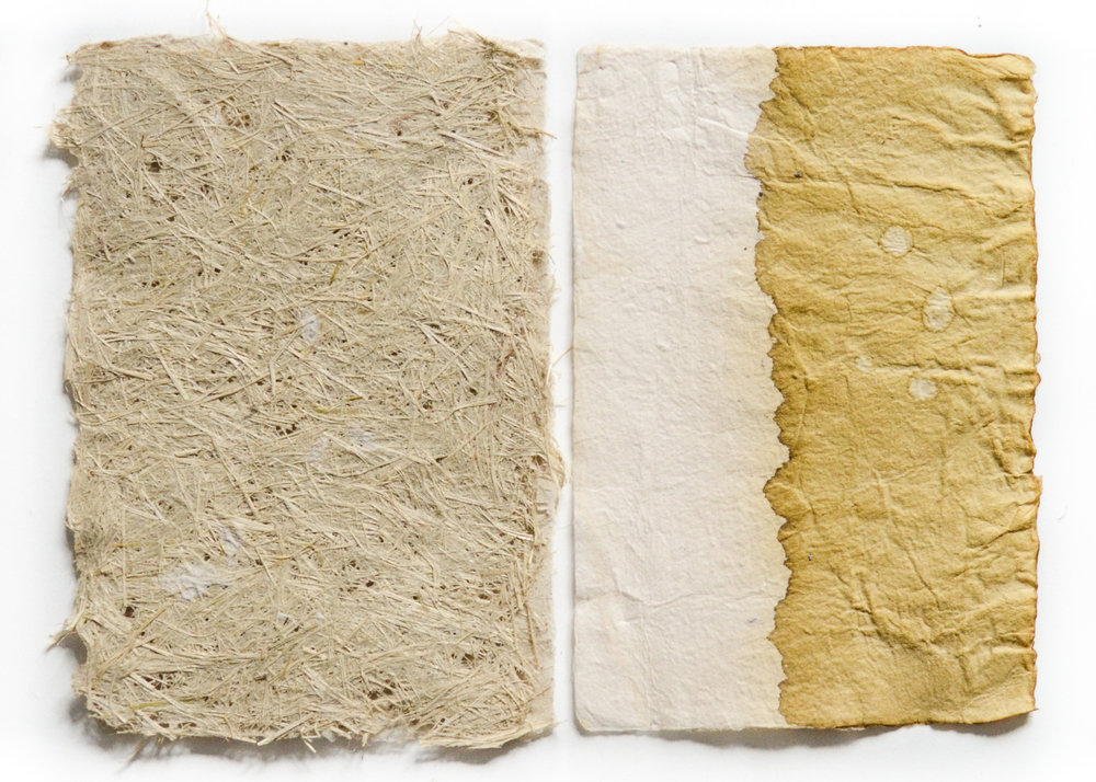 Golden Rod and Oxeye Daisy from the Absaroka-Beartooth Wilderness 3, 12 in. x 9 in., abaca, goldenrod natural dye, oxyeye daisy handmade paper, 2017
