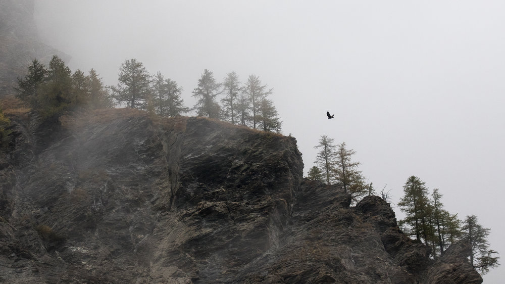 golden-eagle-salva-fauna