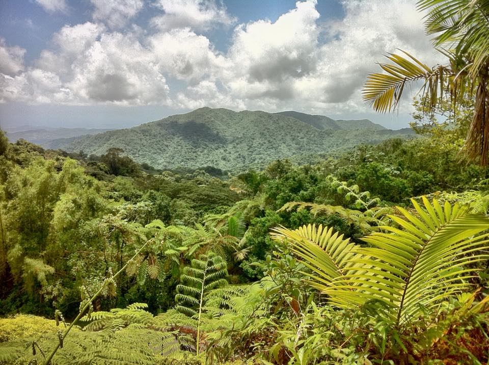 El Yunque Rainforest | Photo taken by me during my last visit back home to Puerto Rico.
