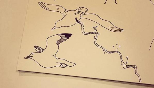 Seagull studies