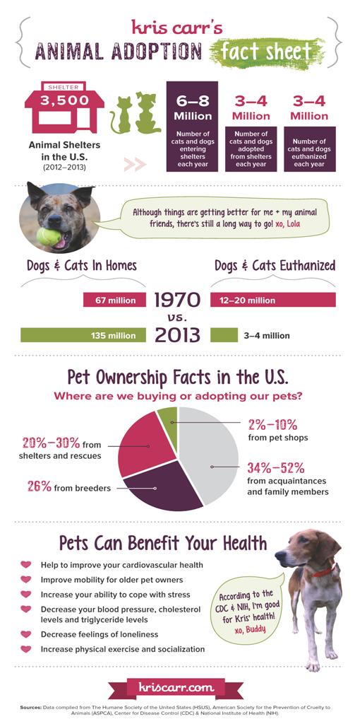 Why Animal Adoption Matters