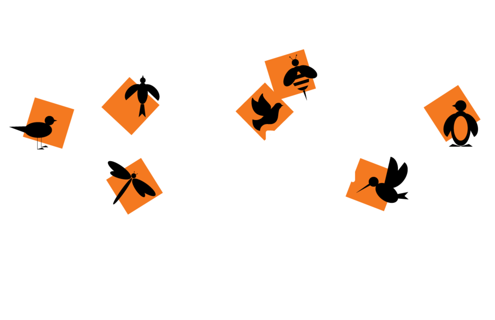 Montessori Day School of Brooklyn