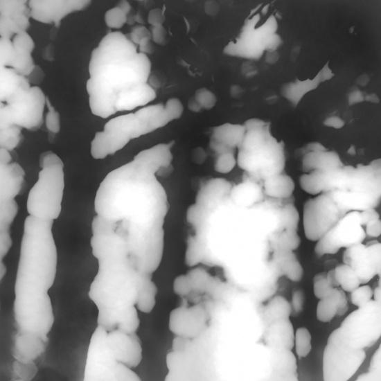 Jan Tyniec, Bonsai, 2009 neg 222630.2.9. 20 x 16, edition 4/16, silver gelatin print on fiber, full matte paper