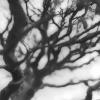 Jan Tyniec, Bonsai,2009 neg 222630.2.12, 20 x 16 edition 4/15, silver gelatin print on fiber full matte paper.