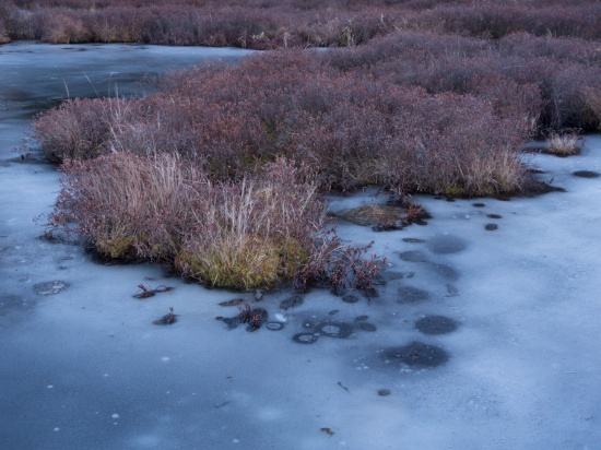 Lodge Cranberry Bog  16 x 24, fine art photography