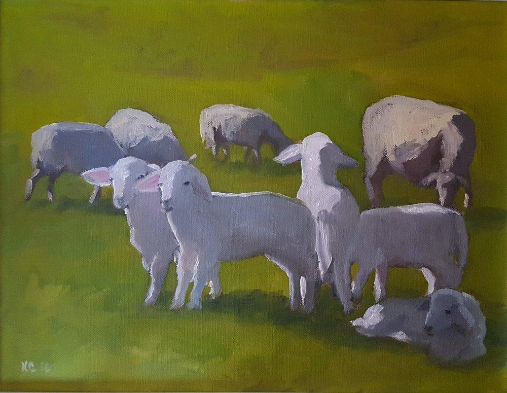 """Agnelli e Pecore, lambs and sheep"" 13 x 16, oil on linen"