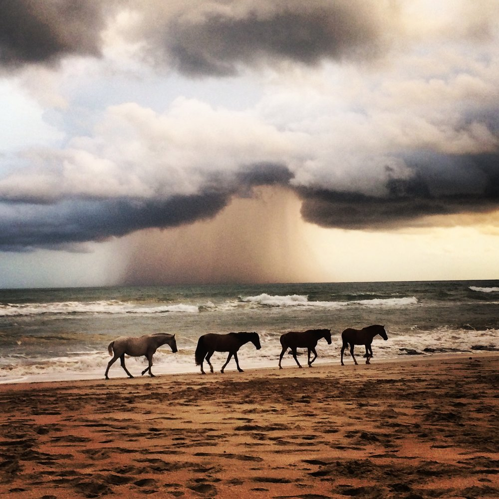 HorsesST.jpg