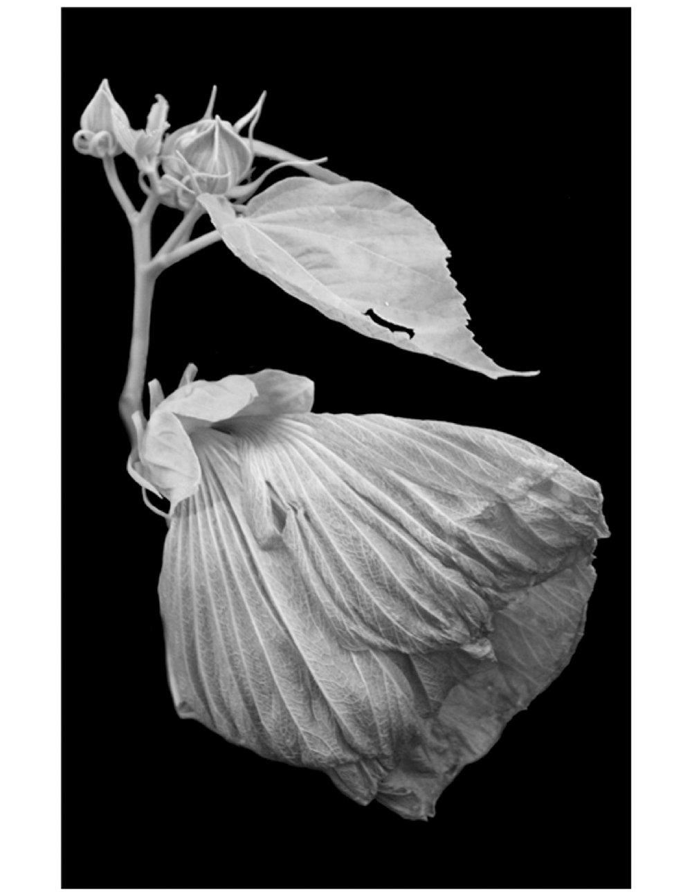 hamlet+mag+single+flower.jpg