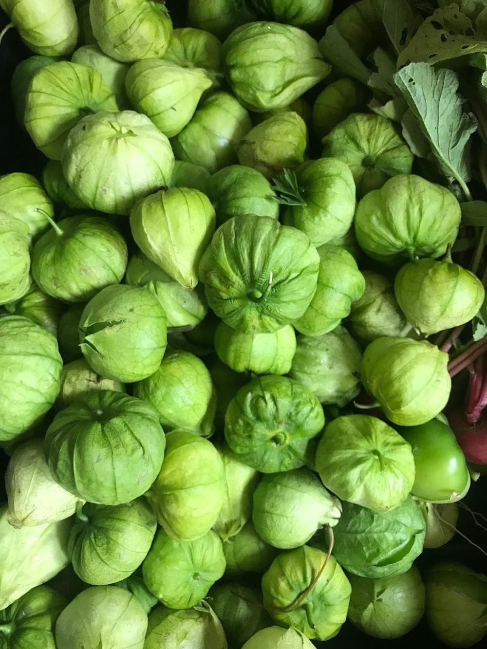 Tomatillos -  A tangy, tart relative of the tomato that is prized in Mexican and South western food. Unique addition to salads and pastas. Essential in salsa verde or gazpacho verde.