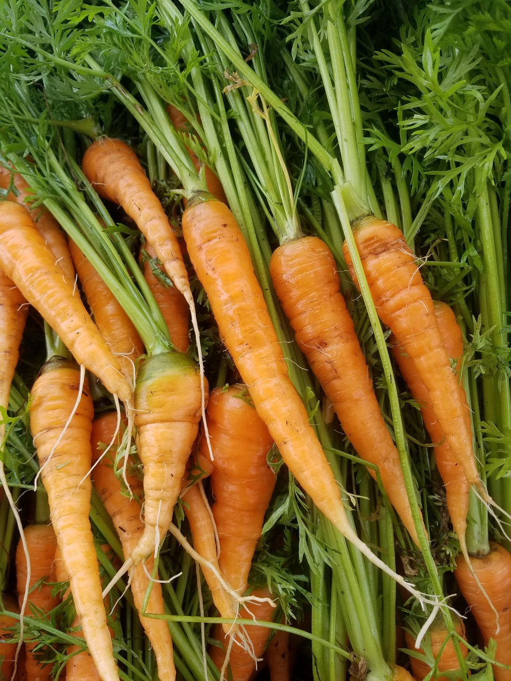 Carrots - A heirloom French variety that has a sweet, earthy flavor and stays crisp even when cooked. Elevate your salads, coleslaw, and soups with this delicious staple crop.