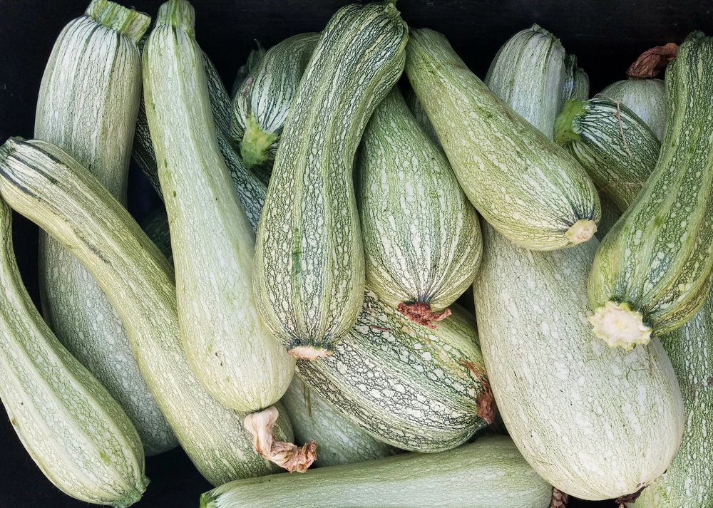 Summer Squash - A versatile staple in any summer pantry. Mild and sweet flesh with soft skin. Perfect roasted or sautéed. Add to soups or casseroles. Top with any sauce for a great noodle replacement.