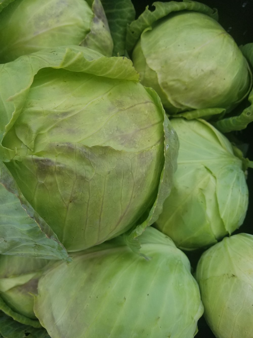Cabbage - These dense heads of sweet leafy greens ad a mild crunch to meals. Essential in cabbage rolls, coleslaw, and sauerkraut.