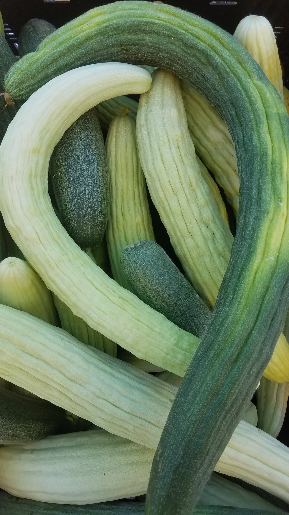 Armenian Cucumber - Also known as Serpent Melon, they have a fantastic crunch that lends itself nicely to salads and pickles. Also terrific in chilled soups or smoothies.