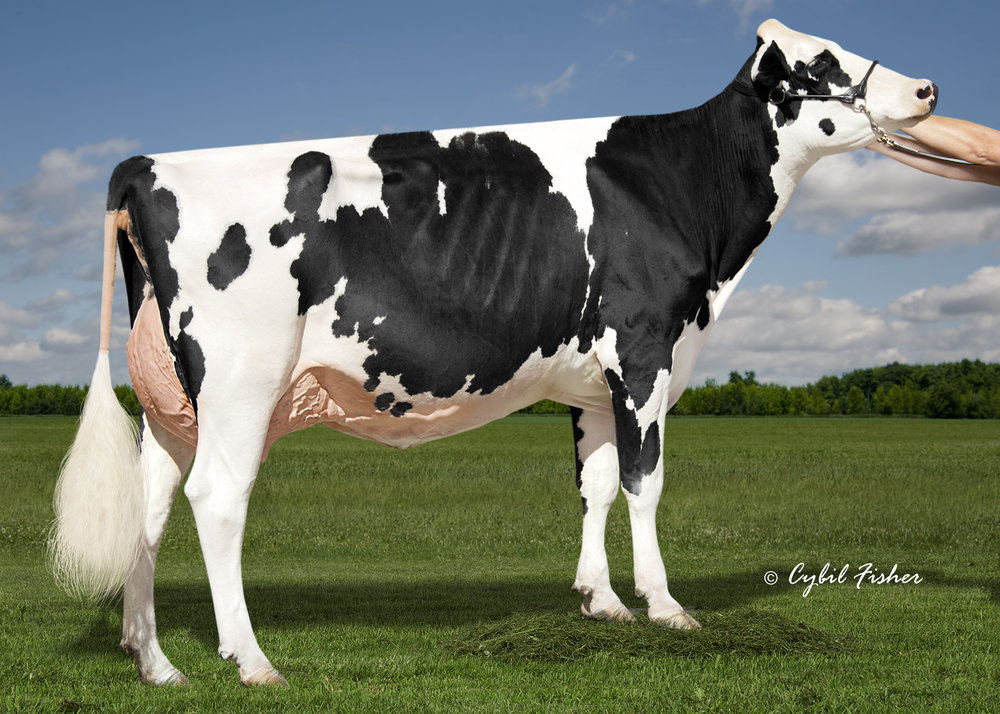 MS MILKSOURCE RL KALYPSO VG86-2YRS