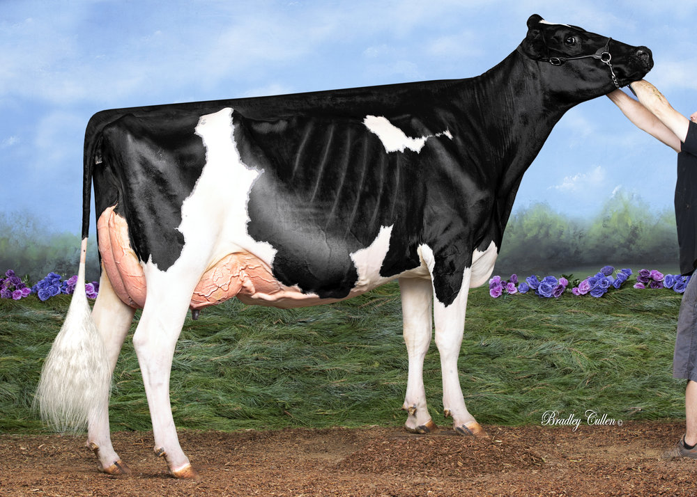 BLUECHIP MH HERO MARION VG89 (MAX)