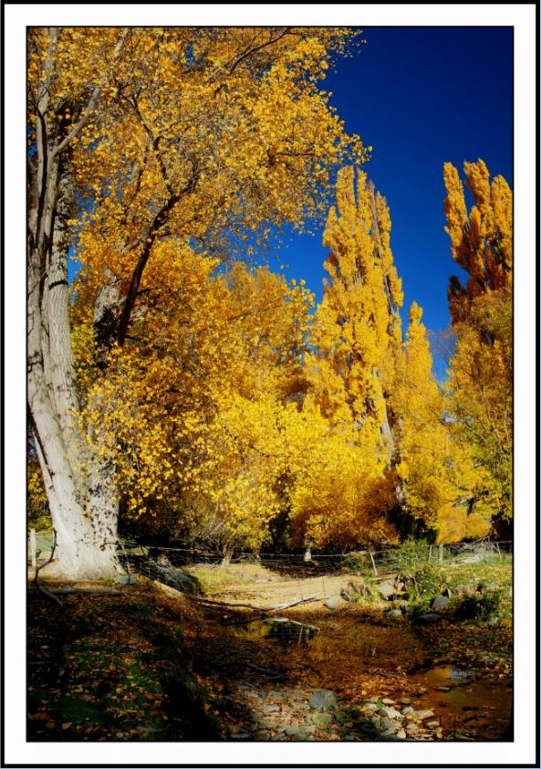 """Otago Gold"""