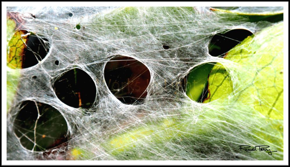 Secrets On The Web-min.png