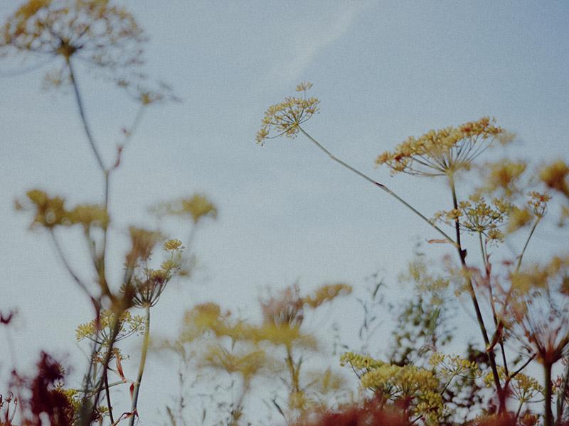 Photographer: Ithaka Roddam http://www.ithakaroddam.com/book-i/portfolio/
