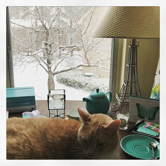 1.17.18 ~ Day 16 of #gentlejanuary2018 • trees...I was trying to take a photo of the snow-covered trees outside my window and Mr. Biscuit decided he needed to be a part of the picture too. #lifewithcats 🐈 ❄️ 🐈 ❄️🐈❄️