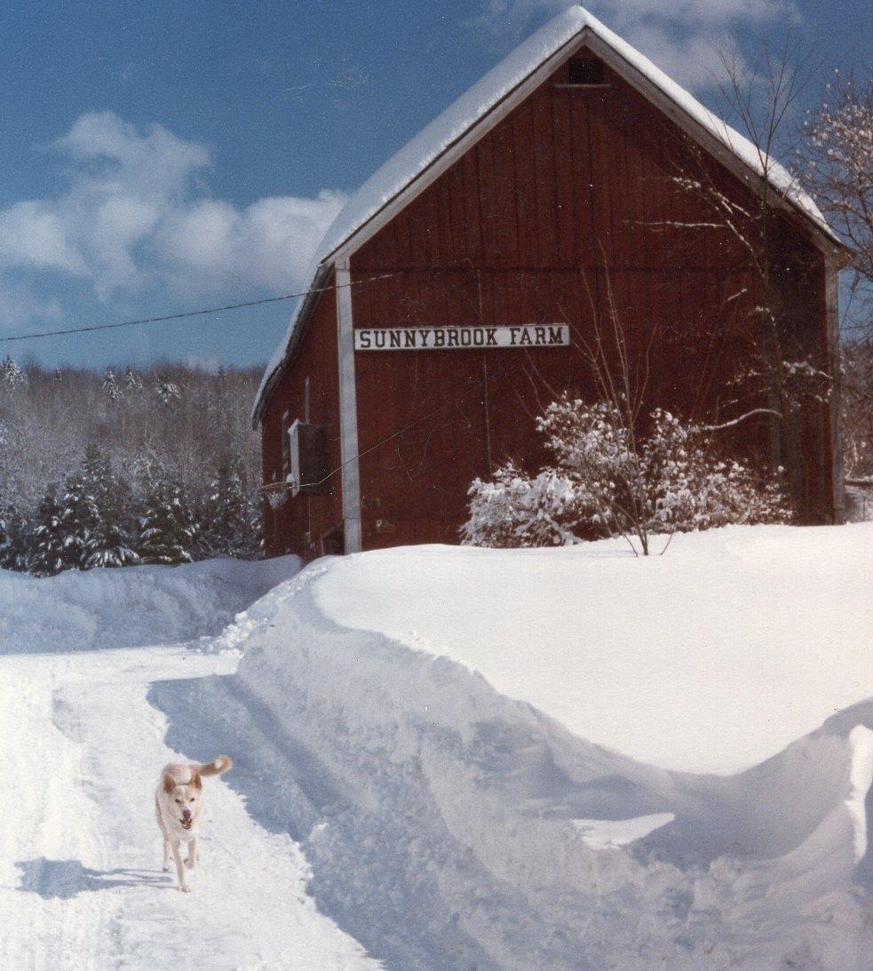 Sunnybrook Farm snow I.jpg