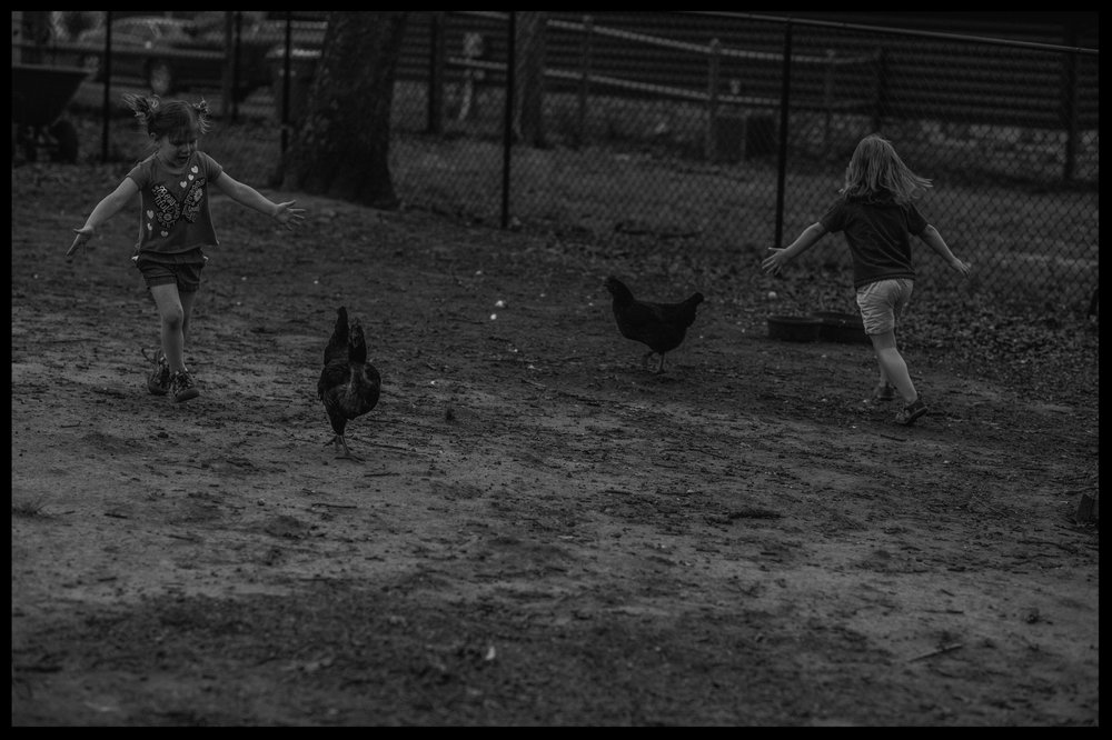 Two little girls chasing chickens in the back yard, black and white