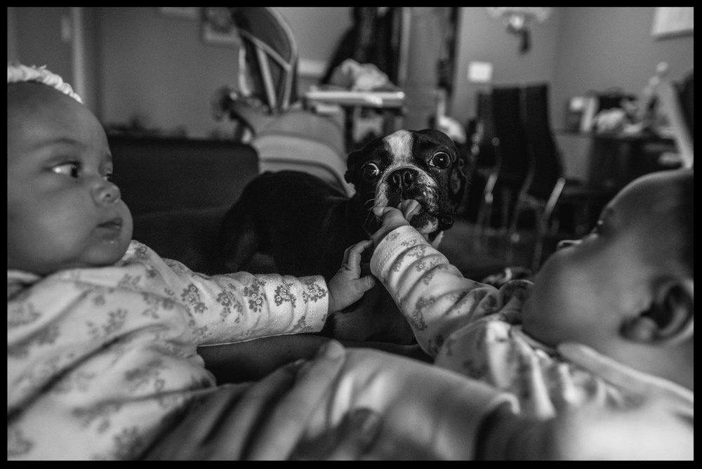 Twin girls letting small dog lick their hands, black and white, Aurora, Colorado