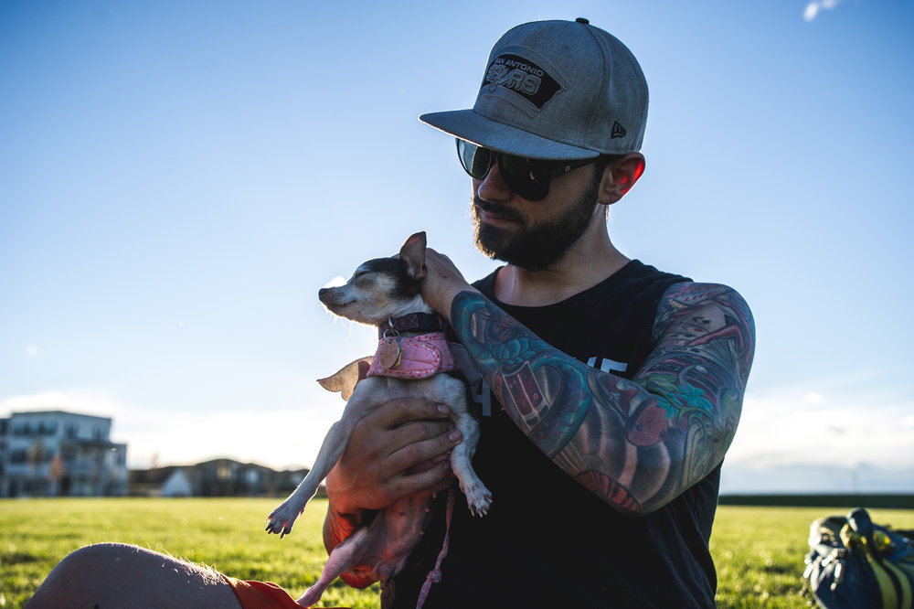 Man holds his pet chihuahua and rubs her head as they sit in a green field in the evening, color, Stapleton, Colorado