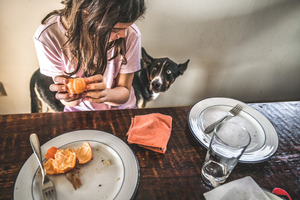 Color photo of a young girl peeling an orange at the table and looking down at her dog who is looking longingly up at her