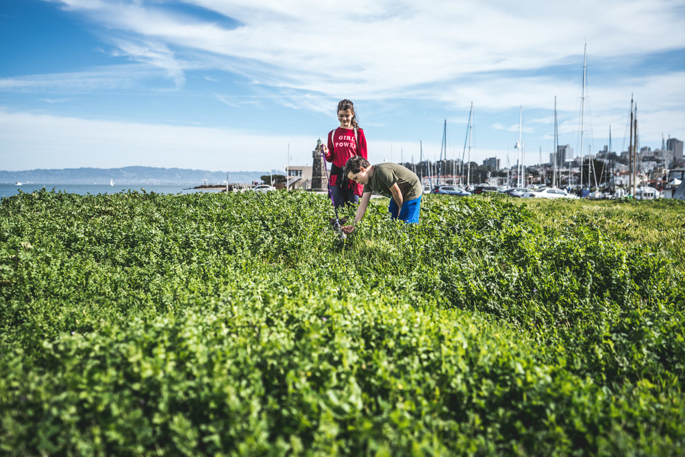 Bright color photo of two kids playing with their tiny dog who is completely submerged in tall, lush, green grass. Photo taken during their full day in the life photography session in Oakland, California. The San Fransisco Bay and the tops of sailboats can be seen in the background.