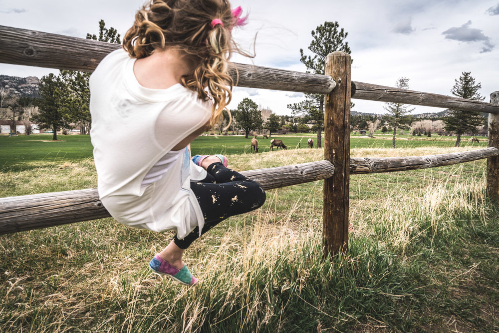 Little girl with blonde curly pigtails sits on a wooden fence and looks at elk who have taken over a golf course in Estes Park, Colorado.