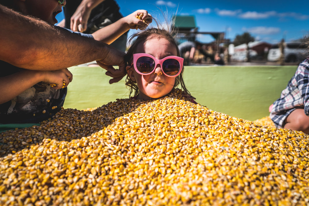 Little girl wearing pink glasses is buried in a vat of dried corn kernels at a pumpkin patch in Parker, Colorado