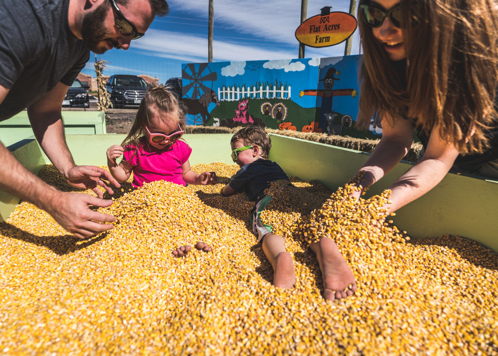 Mother and father bury their two children in a giant container of dried corn kernels at the Flat Acres Farm pumpkin patch in Parker, Colorado during their documentary photography photo session