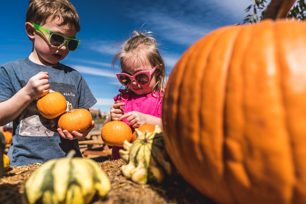Two small children hold pumpkins at the Flat Acres Farm pumpkin patch in Parker, Colorado during their family photo session
