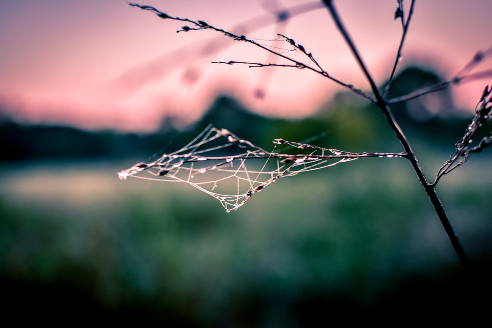 Triangle spider web on a twig