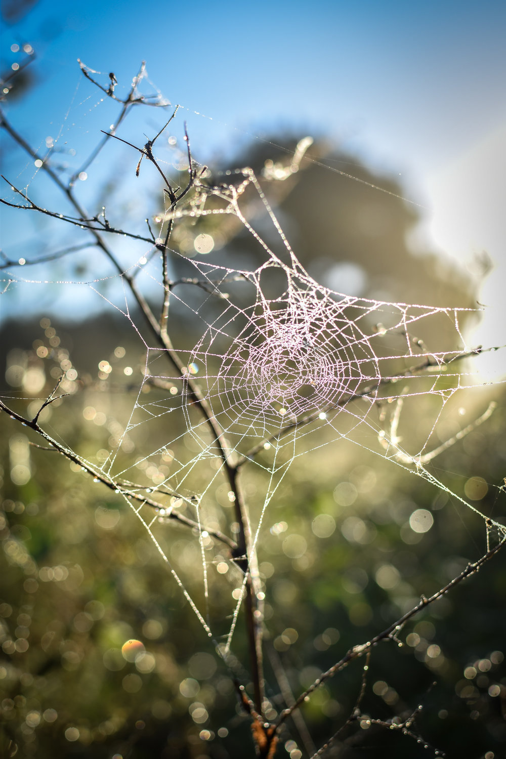 Beautiful spider webs in the sun