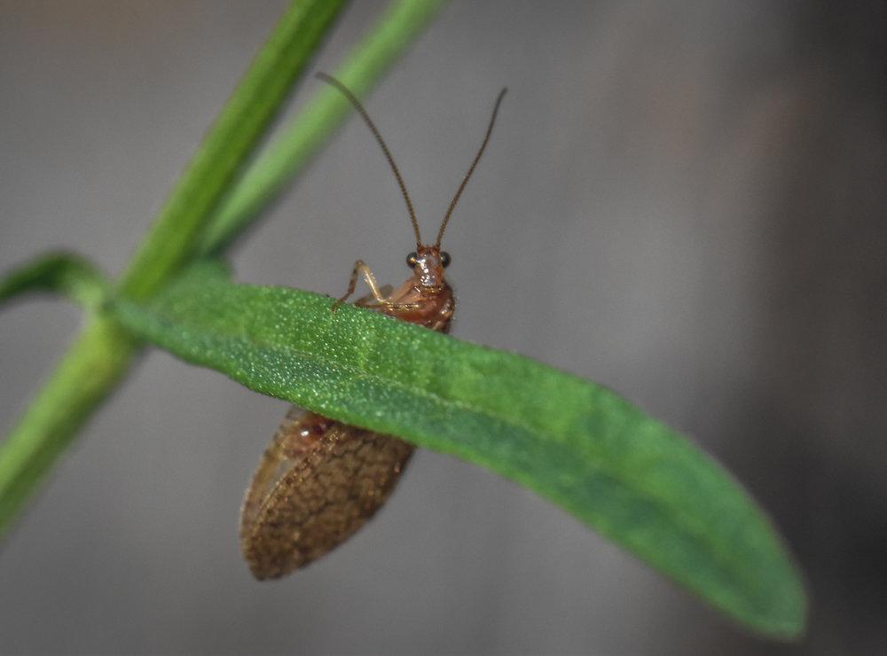 Little bug sitting on a leaf
