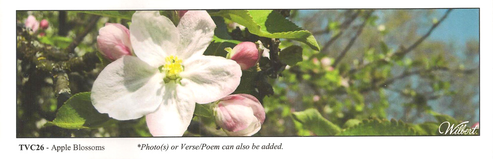 TVC26-AppleBlossoms.jpg