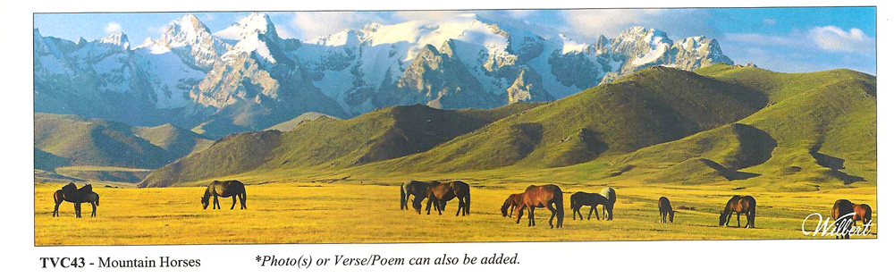 TVC43-MountainHorses.jpg