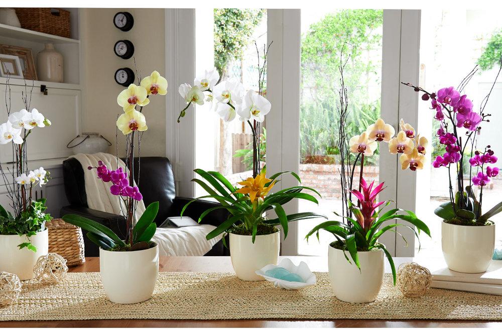 PP_13_OrchidGardens_HERO_W3.jpg