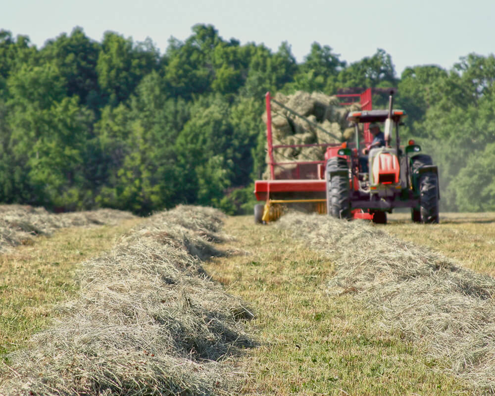 Bauer Hay and Straw -