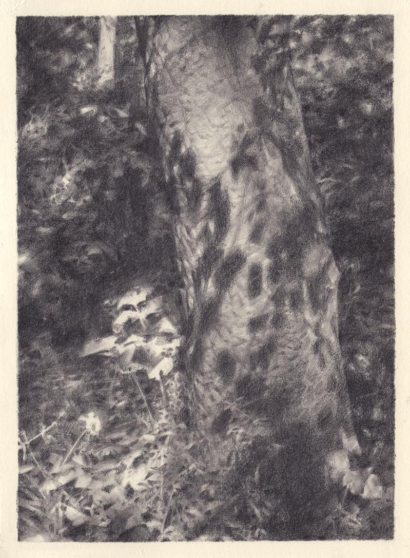 Helegen-Garden-Tree40%.jpg