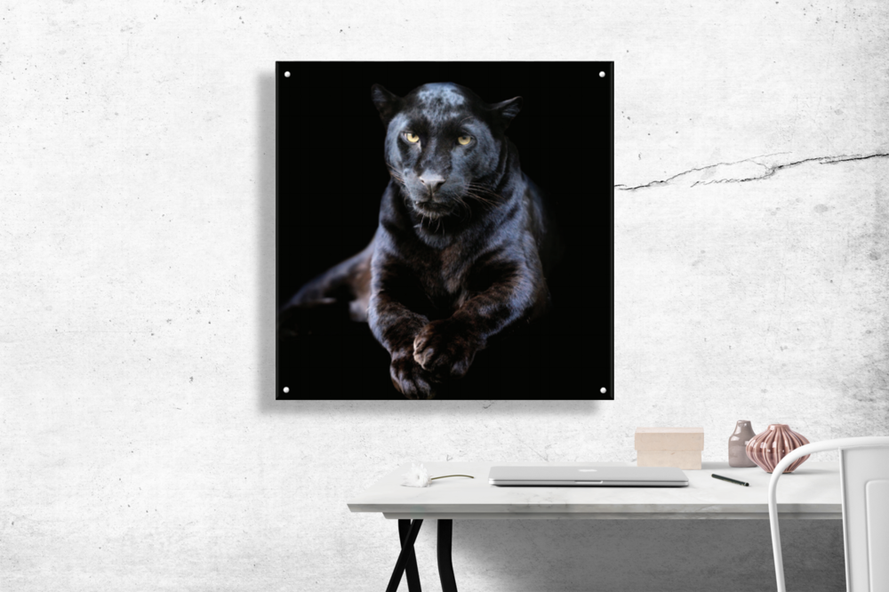 Glass wall art - Stunningly beautiful images of iconic animals printed onto high quality,tempered glass offer a magnificent centrepiece to any home