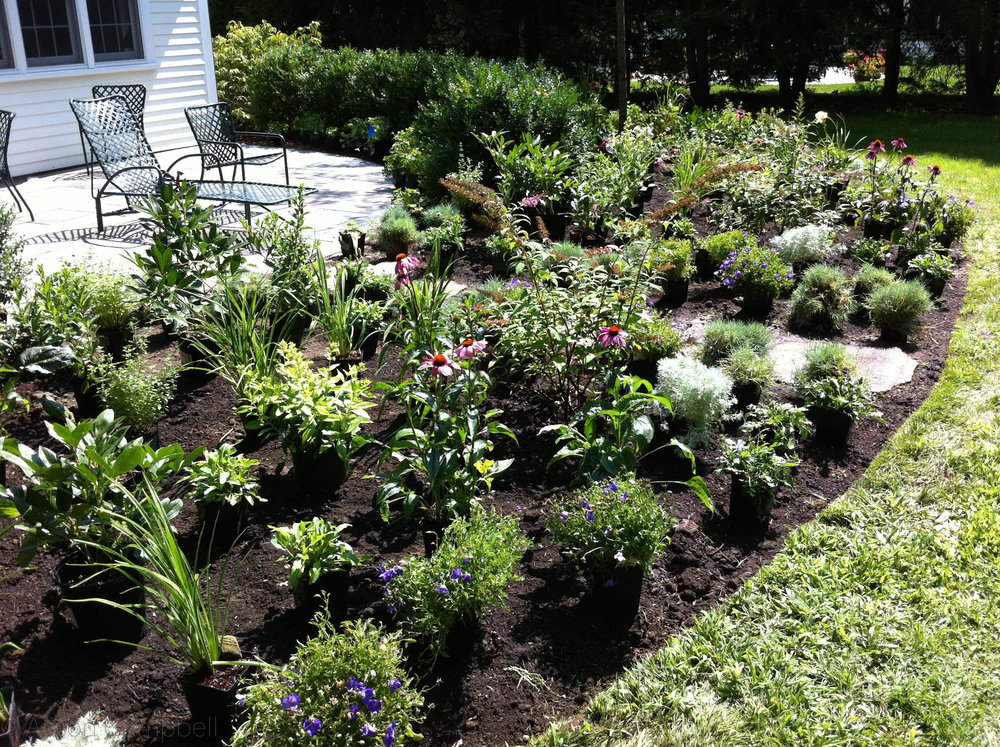 perennial garden install.jpg