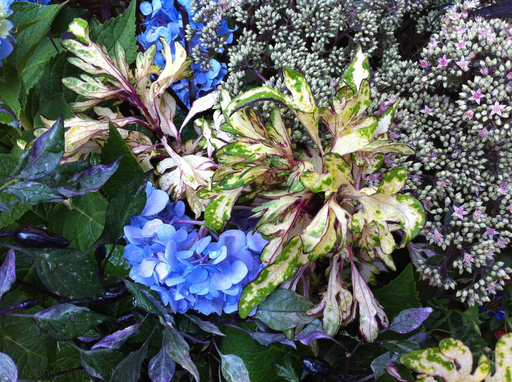 blue and purple close up.jpg